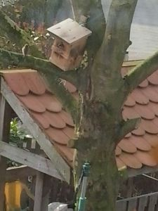 Vogelfreuden